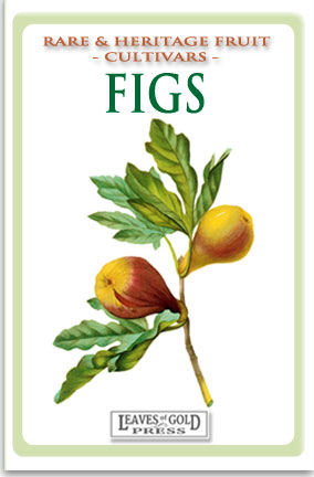 Rare and Heritage Fruit - Figs